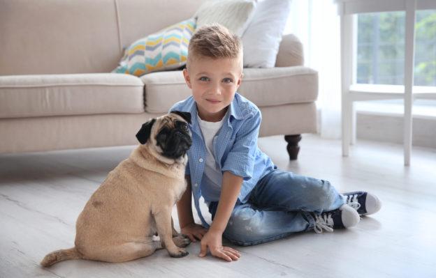 Deciding Between Options for Pet Resistant Flooring